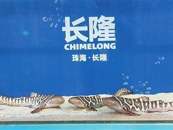 珠海长隆海洋王国再次成功繁育豹纹鲨