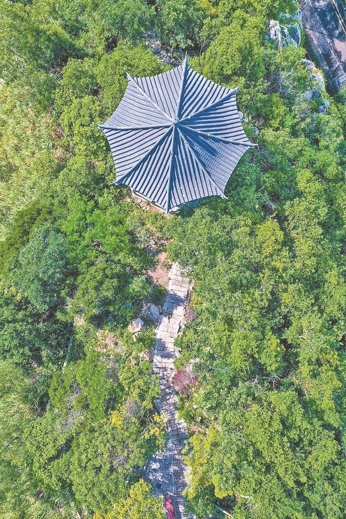 暑假去哪儿?来塘朗山360°看深圳的美