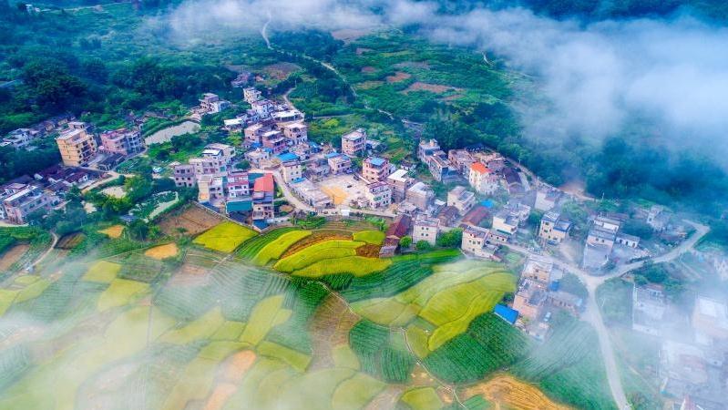 第一!广州获通报表扬!广东推进乡村振兴年度成绩榜单公布