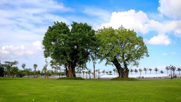 8月空气质量指数达标率100%!珠海1—8月总体空气质量位居珠三角9城市首位