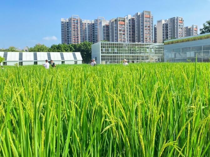 """两大农业主题公园揭幕!广州天河打造全国农科""""硅谷""""示范区"""