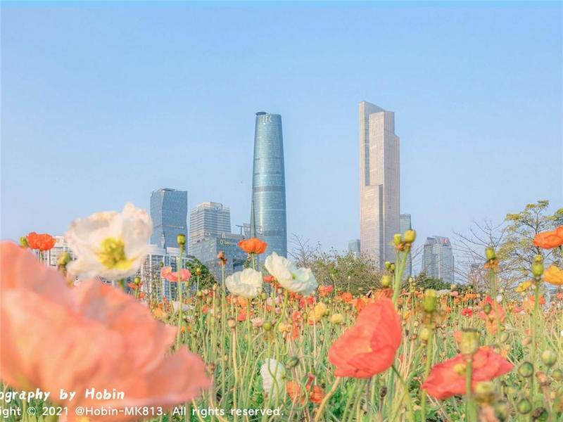 广州本土摄影师历时1年拍摄羊城四季! 张张都是大片!
