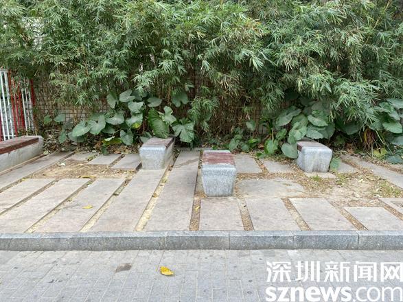 民生盐田丨休闲小公园多枯枝杂草 网友反映后获解决