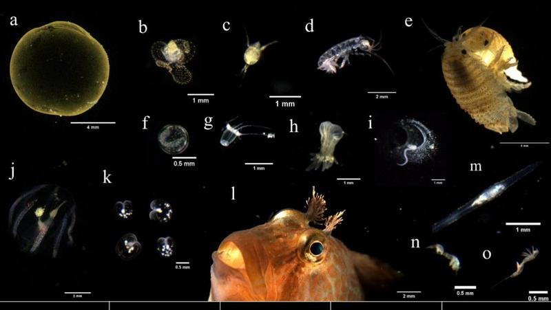 深圳先进院团队研发出新型海洋浮游生物原位成像系统