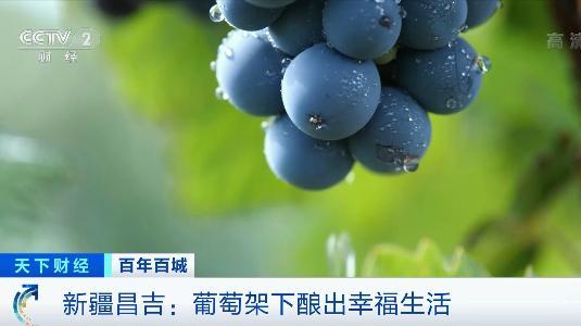 """产值将达150亿元!这里的小葡萄,""""酿""""出大产业"""