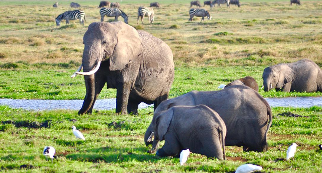 奇观天下|走进非洲最高山峰下的野生大象家园