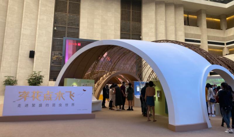 探秘昆虫大家族!深圳这个展览展示100余盒珍贵标本