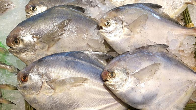 福州发现进口冷冻鲳鱼外包装新冠病毒核酸检测阳性