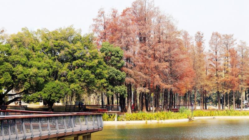 深圳四海公园:这里有五彩斑斓的冬天(组图)