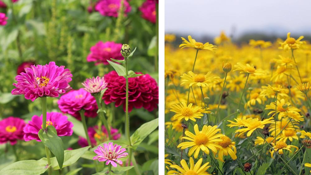 周末天气播报:天气暖湿,正是赏花好时节