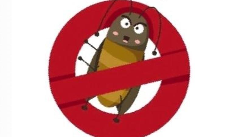 深圳有哪些蟑螂?专家教你三招防治蟑螂