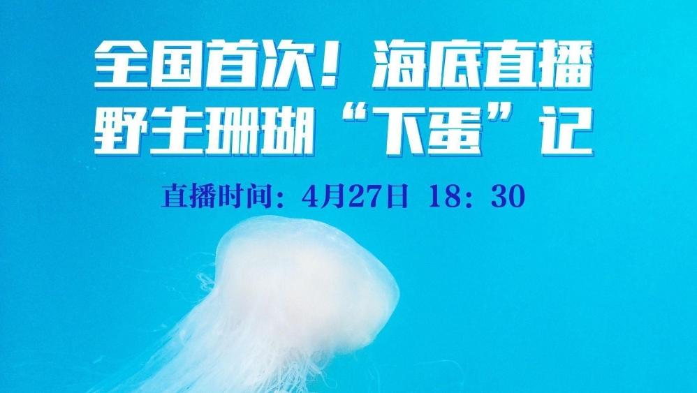 """全国首次!深圳海域今晚将水下直播野生珊瑚""""下蛋""""记"""