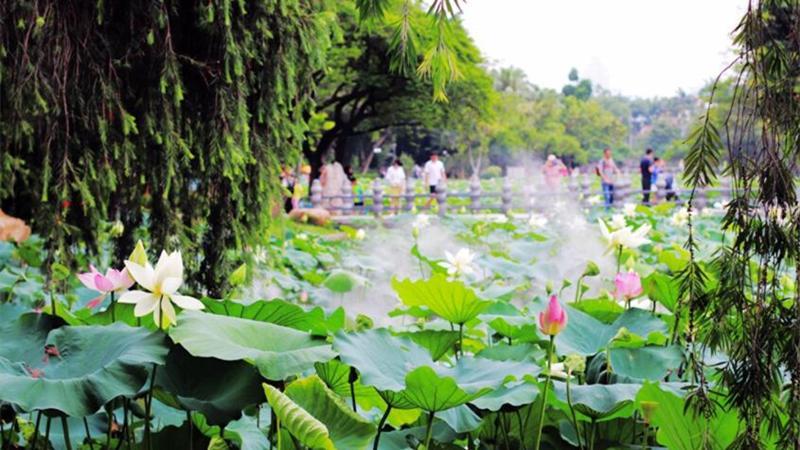 深圳公园端午期间接待游客130.7万人次 深圳湾公园最受欢迎
