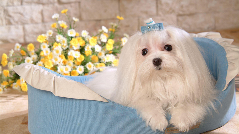 为防控狂犬病 美国将暂停进口来自113个国家的狗