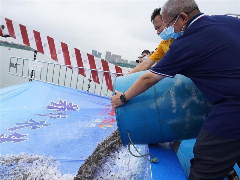 超1500万条鱼苗流入九江,2021年广东省(佛山)江河增殖放流活动举办
