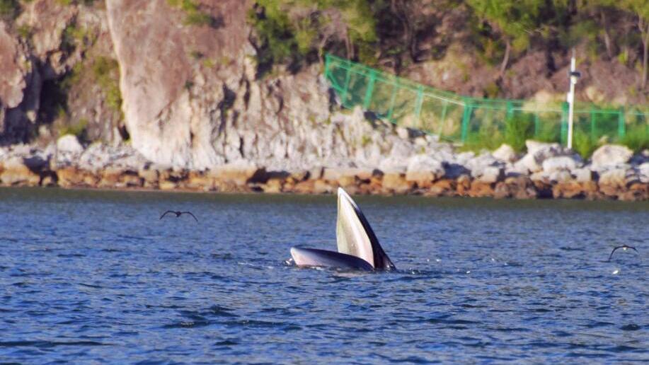 "深圳有""鲸""喜 Surprise!Shenzhen got a Whale"