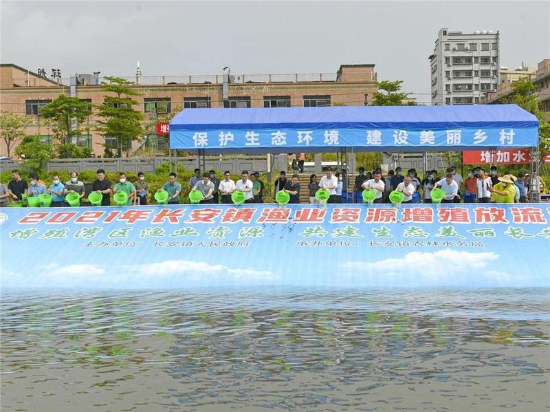"""东莞市长安镇举行""""休渔放生节"""",9万尾鱼苗在茅洲河安家"""