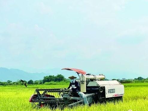 """早稻收割奏响""""丰收曲"""" 预计全市早稻总产量为52.09万吨,同比增0.7%"""