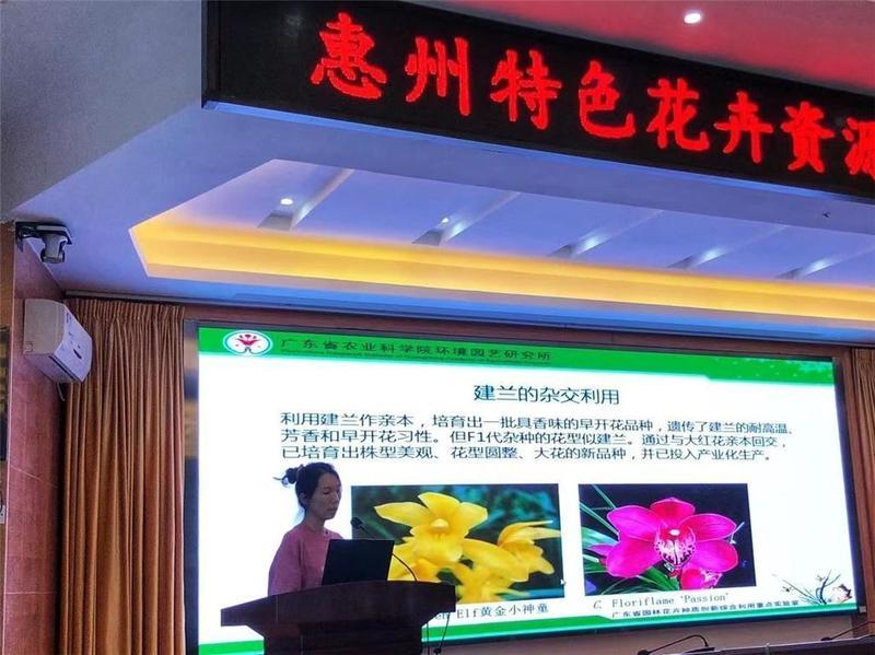 助力惠州花卉产业振兴,省农科院专家传授兰花种植技术