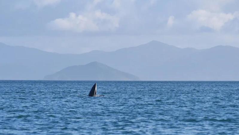 """华大海洋采用环境DNA技术揭开""""小布""""的真实身份信息"""