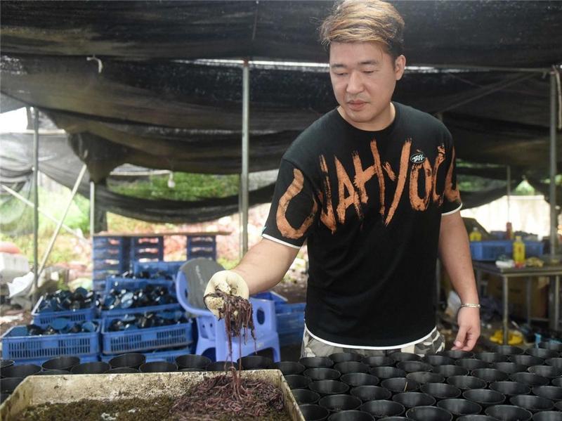 """到惠阳去看看一名香港青年如何让""""小蚯蚓""""成为""""大产业"""""""