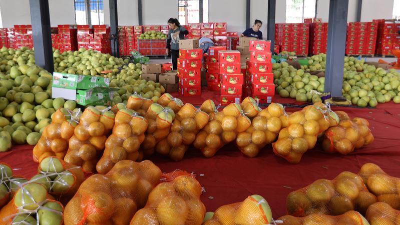 爆单!这种水果,火到全国!一家店一天卖出十几万元!