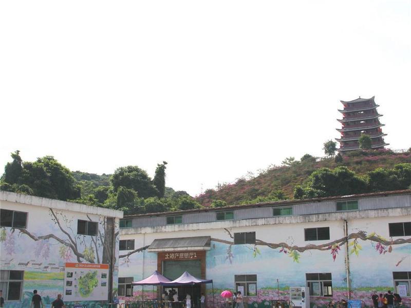 """东莞市大王山森林公园发现两只绿""""凤凰"""""""